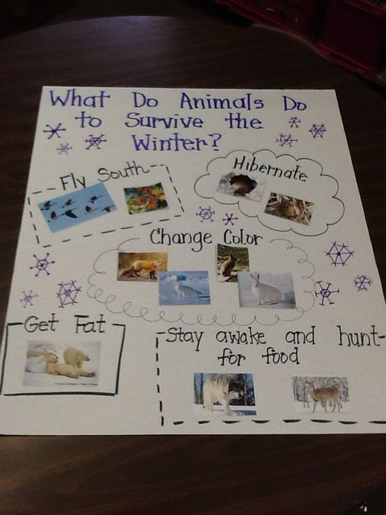 What do animals do in the winter?: