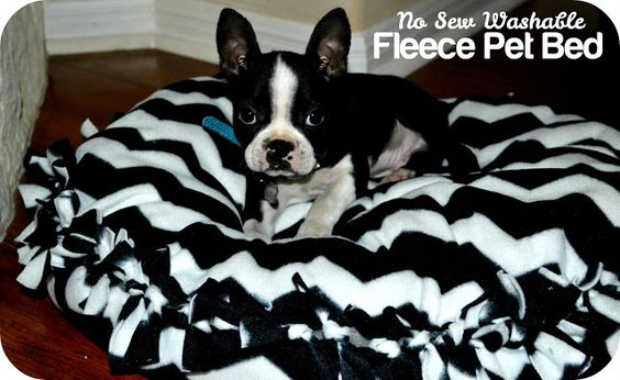 yOuR liTtLe BiRdiE: No Sew Washable Pet Bed
