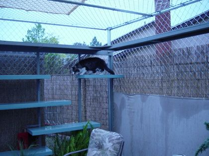 What a great cat enclosure (more pictures in gallery)
