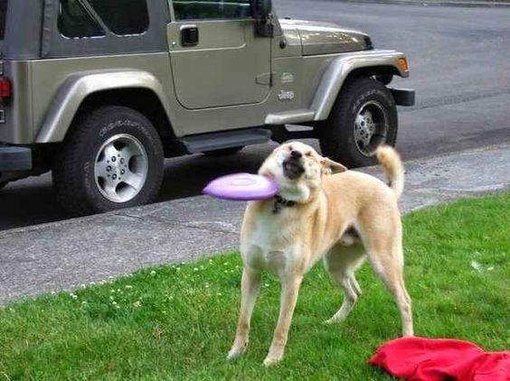 """""""Ich hab gesagt, ich will Deine blöde Frisbee nicht!"""""""