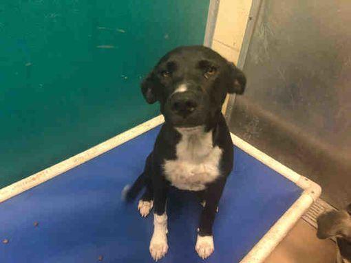 Texas City Tx Border Collie Meet A Dog For Adoption Dog Adoption Border Collie Texas City