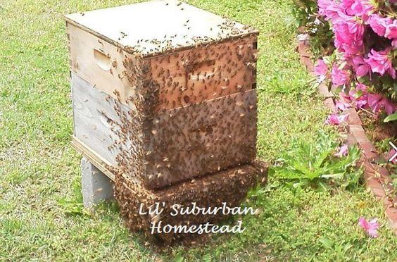 Beekeeping101 - Home | Facebook