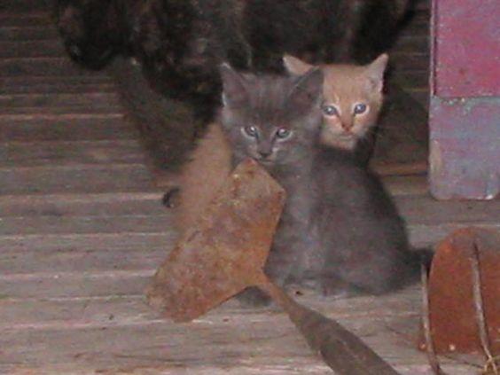 kittens! share cute things at www.sharecute.com