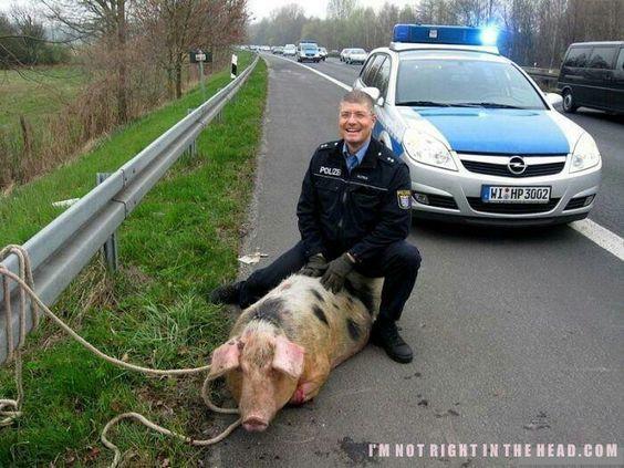 :-) making piglet?