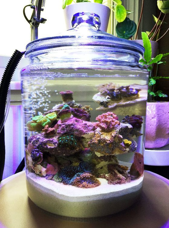 How To Perform A Water Change On A Pico Jar Beginners Articles Nano Reef Community Reef Tank Saltwater Aquarium Mini Aquarium