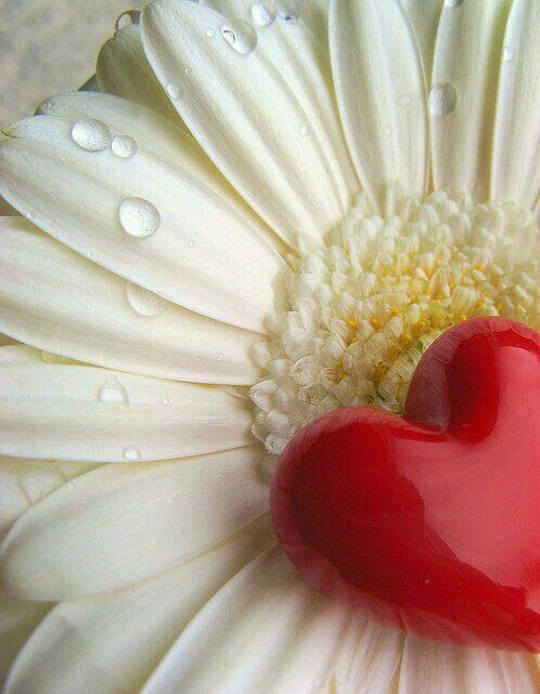 Happy Valentine's Day 💘