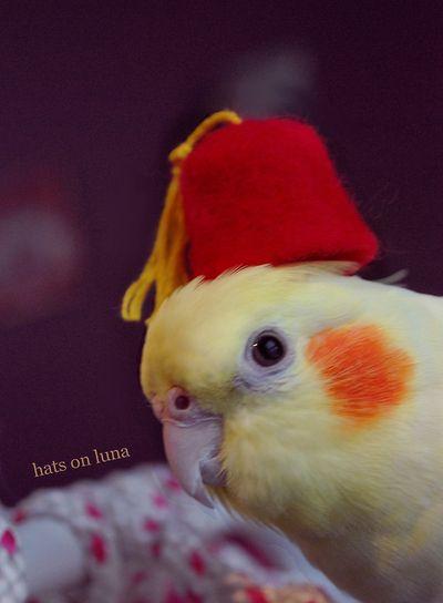 Hats on Luna blog