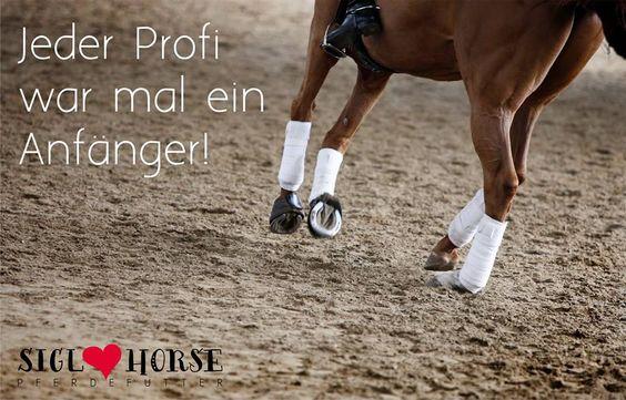 Jeder Profi war mal ein Anfänger!  #reiten #pferde