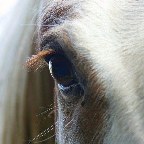 horse #horse inspiring