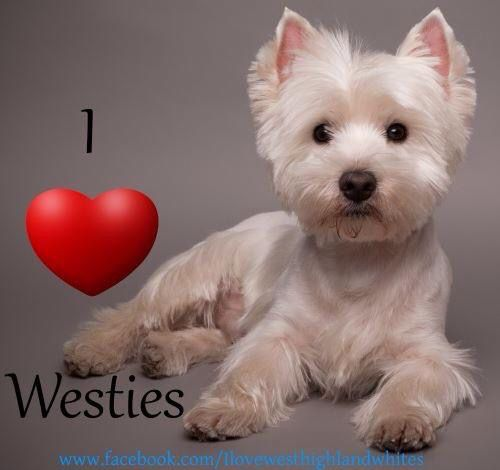 I <3 Westies
