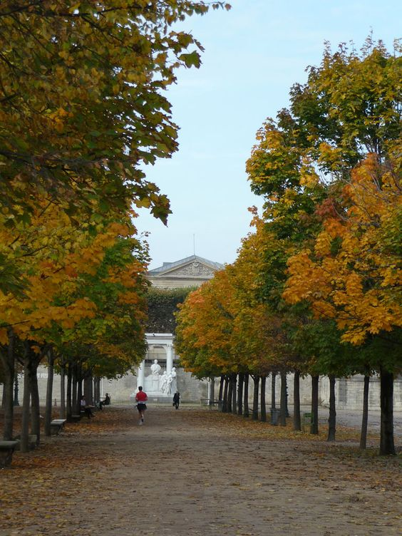 L'automne s'installe dans le Jardin des Tuileries (Paris 1er)  http://www.pariscotejardin.fr/2012/10/l-automne-s-installe-dans-le-jardin-des-tuileries-paris-1er/