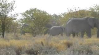 Bezoek tijdens een #Namibië #rondreis het #Etosha National Park