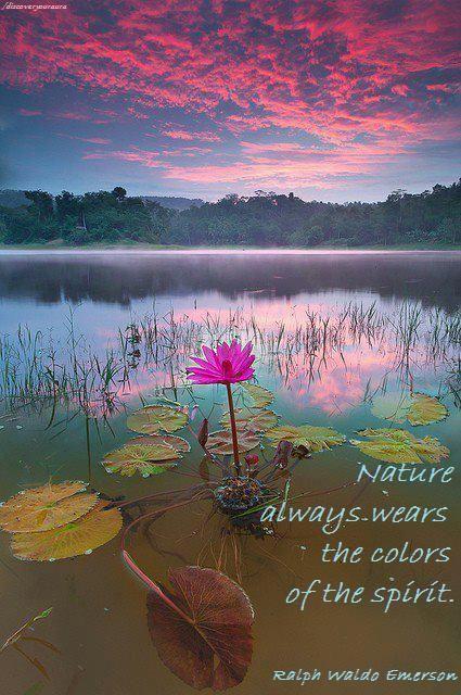 Daily Inspiration  Spiritual Healing  Quotes: