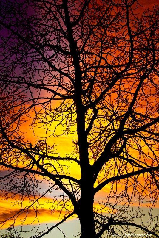 Sunset Autumn by butterflydances