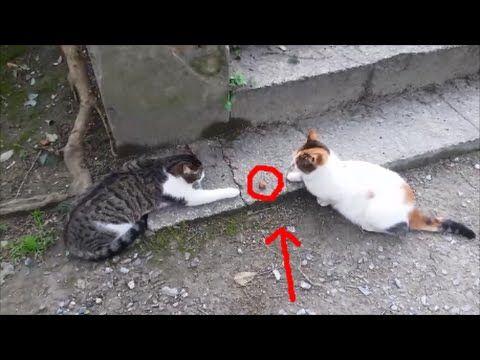 1453388620_hqdefault.jpg | Funny sexy world | Pinterest ... Funny Cat Videos