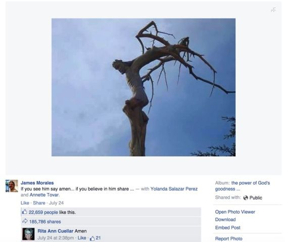 Man Shares a Picture of A Tree on Facebook, It's What's on the Side of the Tree That Has Him Stunned - Likes