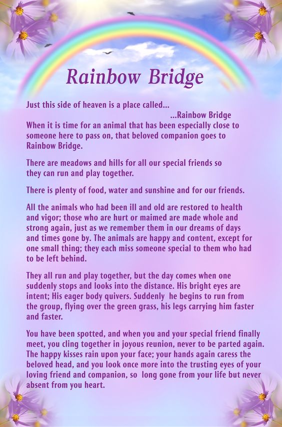 Dynamic image regarding poem rainbow bridge printable