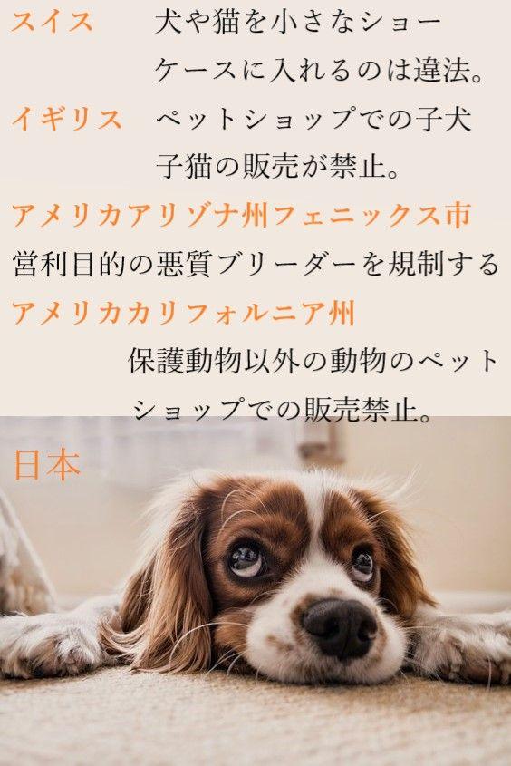 ペットショップで販売できるのは保護動物のみ ペットショップ パピーミル 動物