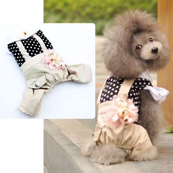 dog suit
