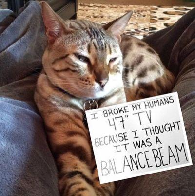 Cat-Shaming …
