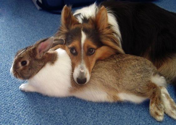 Este perrito que es súper protector con su mejor amigo conejito. | 21 animales increíblemente adorables con sus mejores amigos