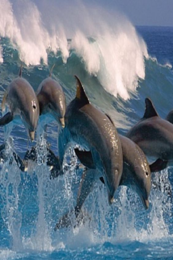 Do Dolphins Carry On Conversations #dolphins #carry #conversations #sea #world