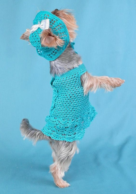 Dog clothes set hat & dress Outfit Puppy sweater Clothes