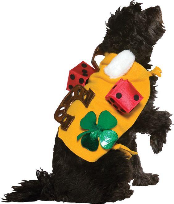 pet costume: lucky dog