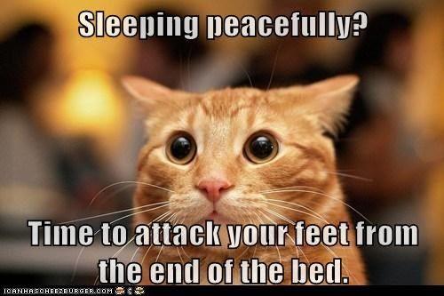 Fiendish Cat Is Fiendish