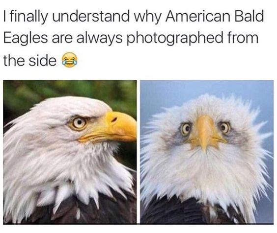 ** Not the same eagle in other photo.
