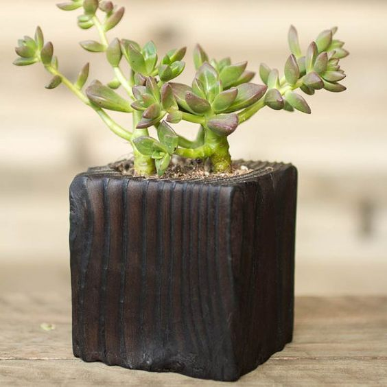 Succulent Shou Sugi Ban Wood Planter Vertical by HammerandBrush, $40.00