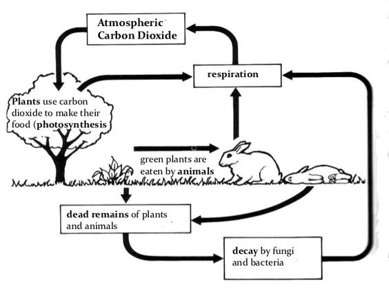 Cycles of Matter  The Nitrogen Cycle and the Carbon Cycle   Video     Study com