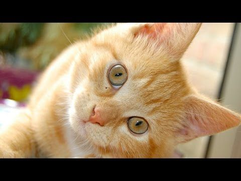 Kittens Cute Love for You in HD - top 10 cutest baby kittens doing funny things - YouTube  More cute kittens HERE http://goo.gl/FyrQ9X