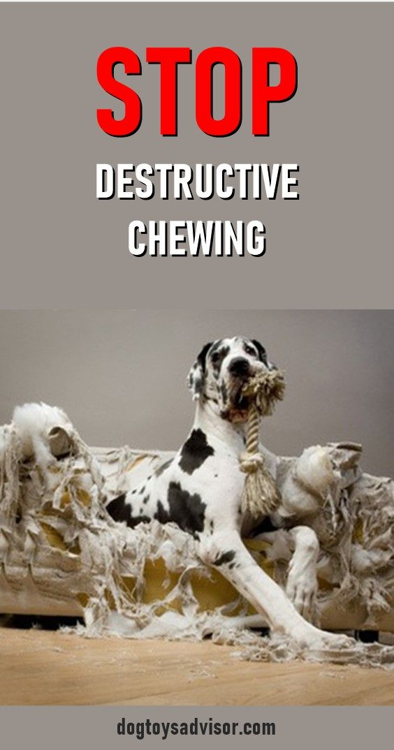 Here S A List Of The Best Chew Toys For Dogs To Curb Destructive