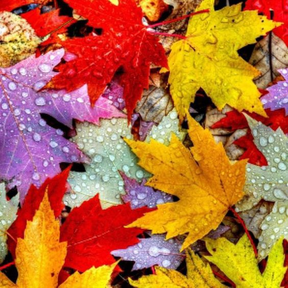 """""""Autumn is a second spring when every leaf is a flower."""" ― Albert Camus"""