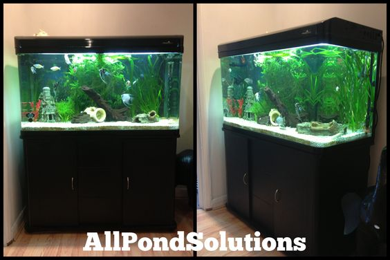 Ponds tanks and cabinets on pinterest for 7194 garden pond
