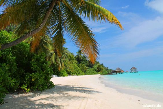 Kuramathi ist eine der größeren Inseln auf den Malediven. Aber lässt euch davon nicht täuschen: Man ist trotzdem fast immer allein! Es gibt immer ein schönes, hinter Palmen verstecktes Plätzchen um ruhig die Sonne der Malediven zu genießen.