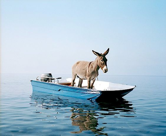 donkey on a boat near the island Alicudi, Italy by Paola Pivi: