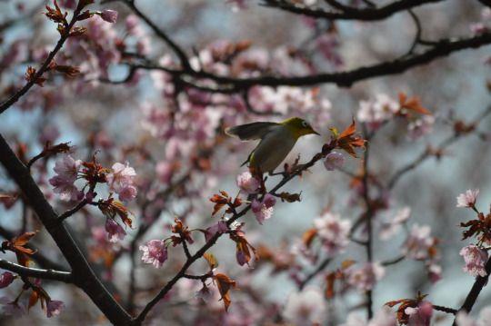 259:「Early bird」@千秋公園