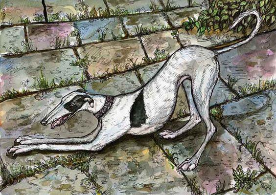 A Little Anticipation  Greyhound Art Dog Print by AlmostAnAngel66, £15.00