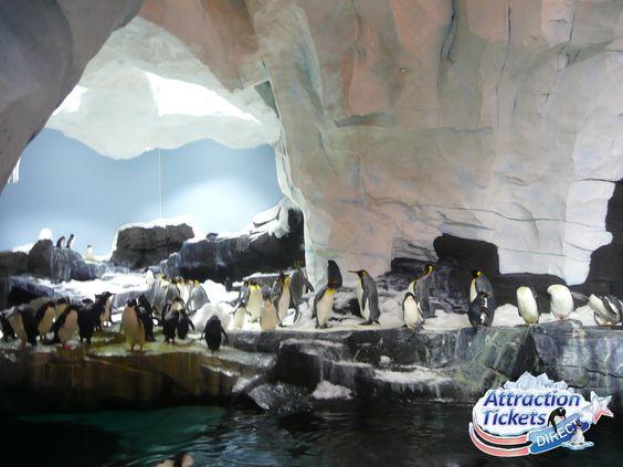 SeaWorld Antarctica Empire of the Penguin #SeaWorld #Pinguins