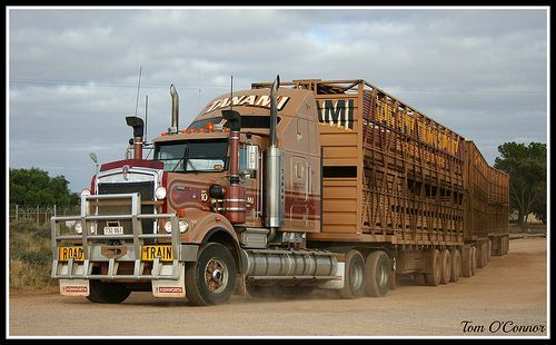 Tanami Livestock With Images Built Truck Cattle Trailers