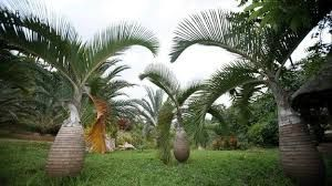 Image result for nigerian garden