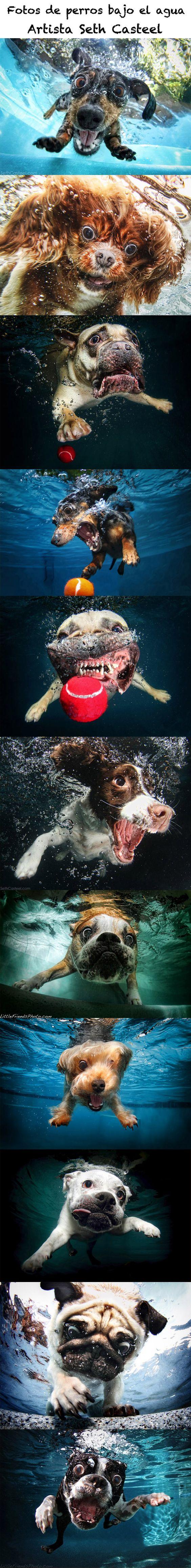 Fotos de perros bajo el agua  Artista Seth Casteel.