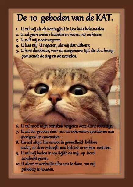 De 10 geboden van de kat