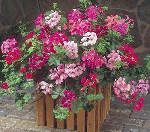 S P E C T R U M Spectrum Charts Flower Names Flowers Holiday Decor