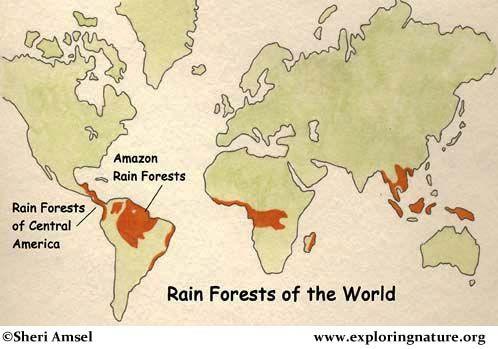 Amazon Rainforest Of South America Rainforest Animals