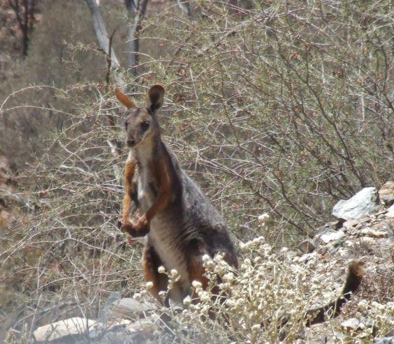 Arkaroola Wilderness Sanctuary (Australia): Hours, Address, Top-Rated Nature & Wildlife Area Reviews - TripAdvisor