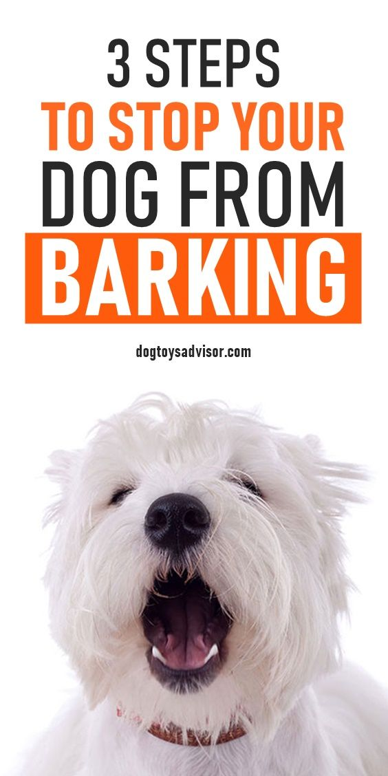 Does Your Dog Bark At Other Dogs It Can Be Really Frustrating