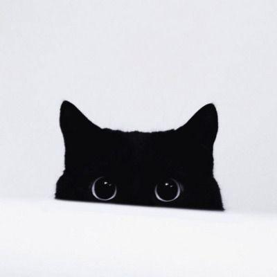 i can totally see you, fella.